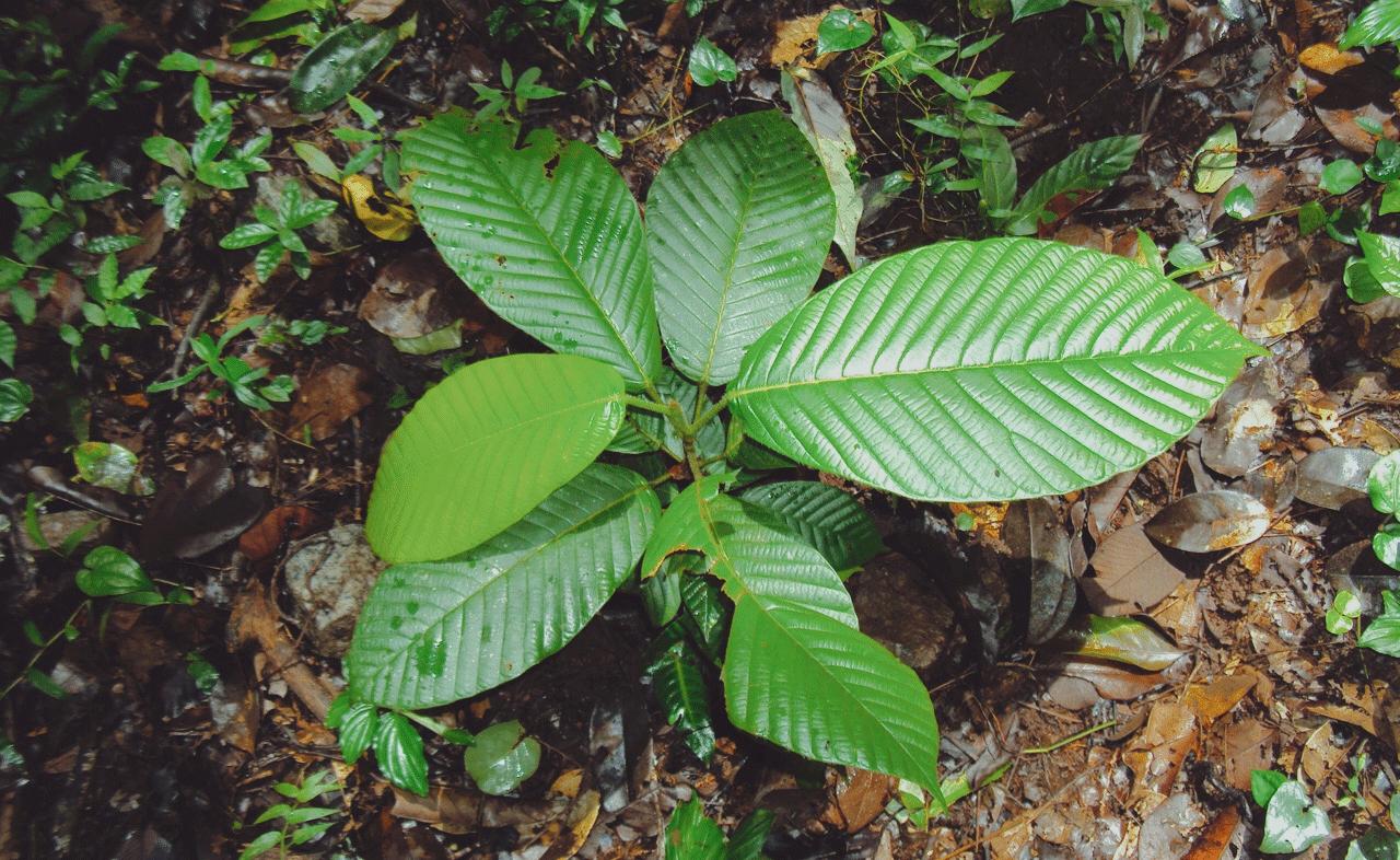 Tropical Rainforest Plants Names List - nature wallpaper